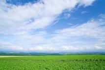 5月29日は「こんにゃくの日」! いま話題の変わり種商品を紹介