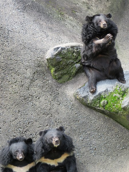 君 死亡 パン 「パンくん」で有名なあの動物園でクマ惨殺事件が起きていた|NEWSポストセブン