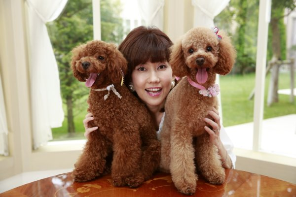 Image result for Poodle 犬