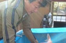 錦鯉界の頂点君臨の前川清 新潟で鯉専用巨大水槽借りる