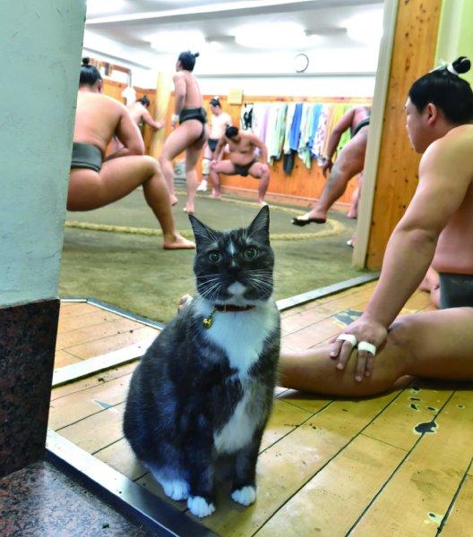 荒汐部屋の猫親方モル 蒼国来が名付け親で意味は「猫」|NEWSポストセブン