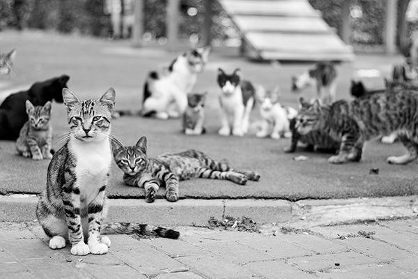 謎が多い「猫の集会」 無理に解散させる必要はなし NEWSポストセブン