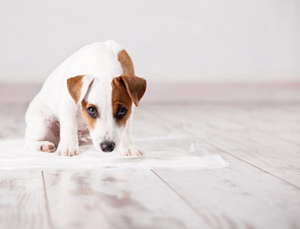 「犬 食糞 トイレ」の画像検索結果