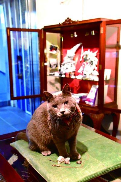 ギャラリで接客を務めるグレーの猫店長