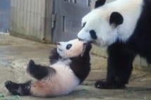 この年の6月、上野動物園でシャンシャンが誕生した(時事通信社)