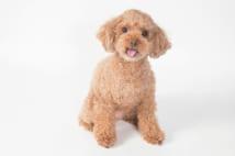 人気の犬が罹りやすい病気は?