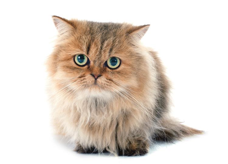 猫を飼っているかが寿命に影響