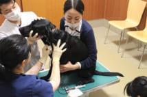 日本動物高度医療センターでは、献血ドナー登録をすると、年2回の定期採血が行われる(写真提供/日本動物高度医療センター)