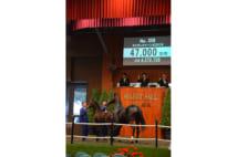 セレクトセールから生まれる注目馬たち GI勝利数は100間近