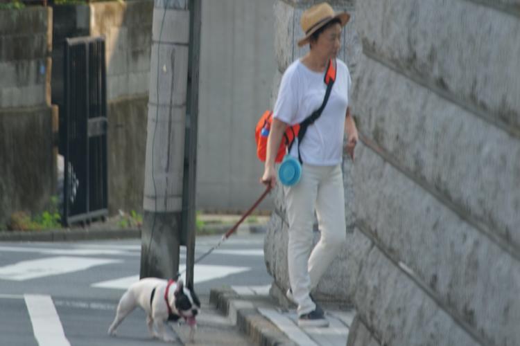 工藤静香 犬 の散歩