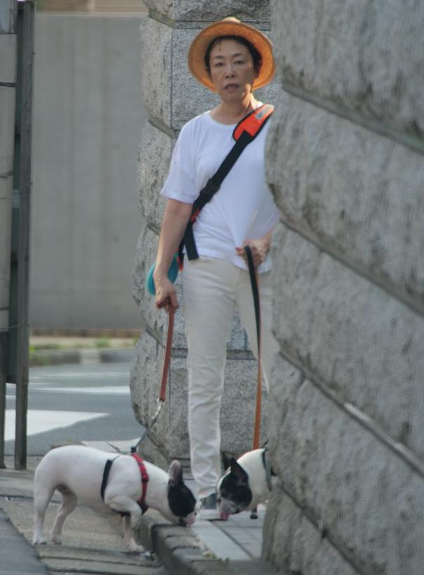 愛犬2匹と猛暑の散歩