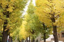 芸能人も多く住む「成城学園前」、東京を代表する高級住宅街の住環境は?