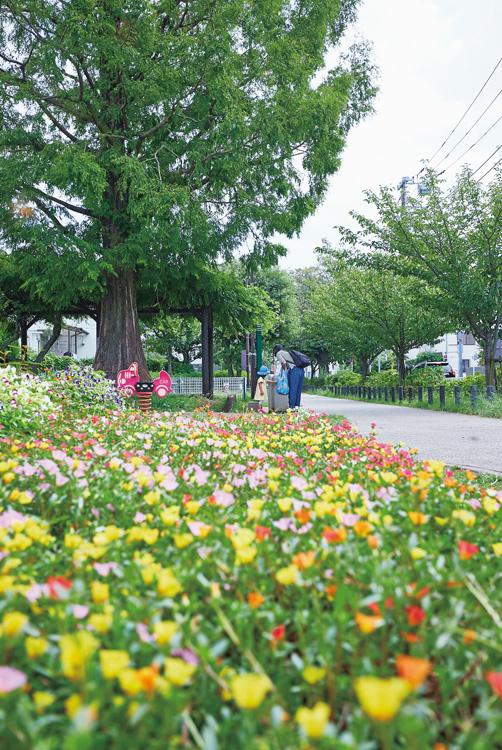 緑が美しい烏山川緑道