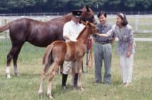 1997年には御料牧場で一定の距離を保ちながら馬と戯れられた(写真/JMPA)