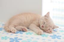 猫の睡眠スタイルは横向きが一般的。性格に関係なく、安心できる場所であれば、どの猫でもこの寝相をとるという(Ph:Getty Images)