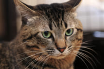 猫と犬、より癒やされるのはどっち?