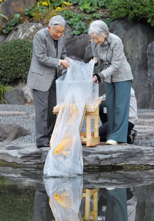 2018年に上皇上皇后両陛下はヒレナガニシキゴイを放流。退位を前に、池のコイをもう少し増やしたいというお気持ちからだった(時事通信フォト)