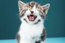 2019年重大ニュース【ライフ・ビジネス】猫の鳴き声の秘密