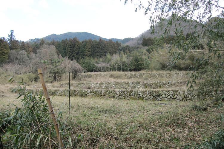 もともと斜面に作られた棚田だったが、耕作放棄地になって荒れ放題に