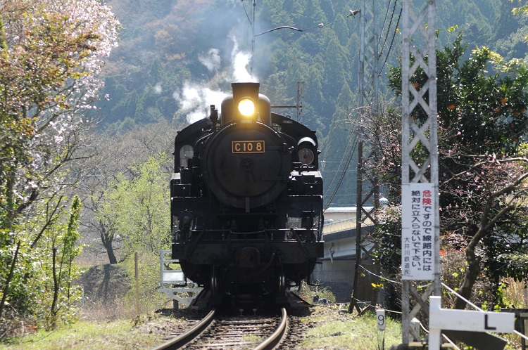 大井川鉄道では毎日、SLが運行されている。