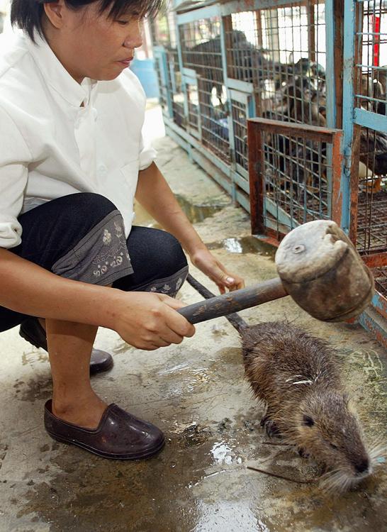 の 踊り 食い 中国 ネズミ ネズミにコウモリ… 新型コロナウイルス騒動で中国のゲテもの食い写真が続々流出:しらべぇ