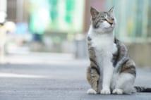 猫の耳に注目すると…(GettyImages)