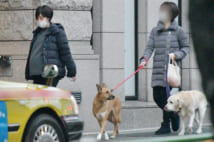 """愛犬・アリス(右)の散歩は、""""第三者""""が"""