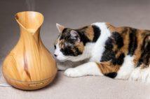 猫にも癒しの効果を持つアロマ(写真/GettyImages)