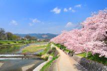 散歩しながらの花見に最適な賀茂川(写真/アフロ)