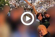【動画】安倍昭恵氏の花見問題、総理でも完全に制御不能状態か