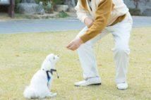 老後の癒やしを求めて飼ったペットの治療費で生活破綻の危機も