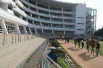 無観客での開催となった中山競馬場のパドック(2020年3月1日)