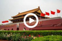 【動画】中国で甲殻類に感染する「謎のウイルス」が蔓延している