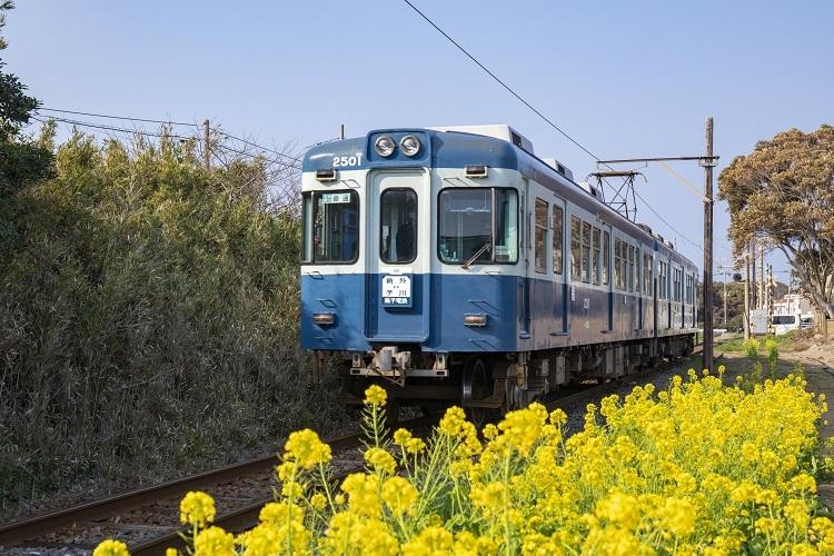 銚子電鉄と菜の花(時事通信フォト)