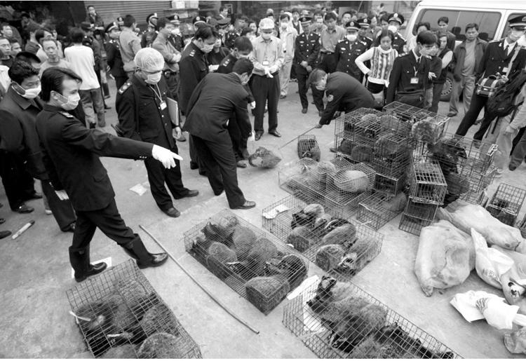 中国やアフリカ、中東などの市場では、野生動物が食品や家畜の餌として取引される。写真は中国・広州市の野生動物市場(写真/共同通信社)