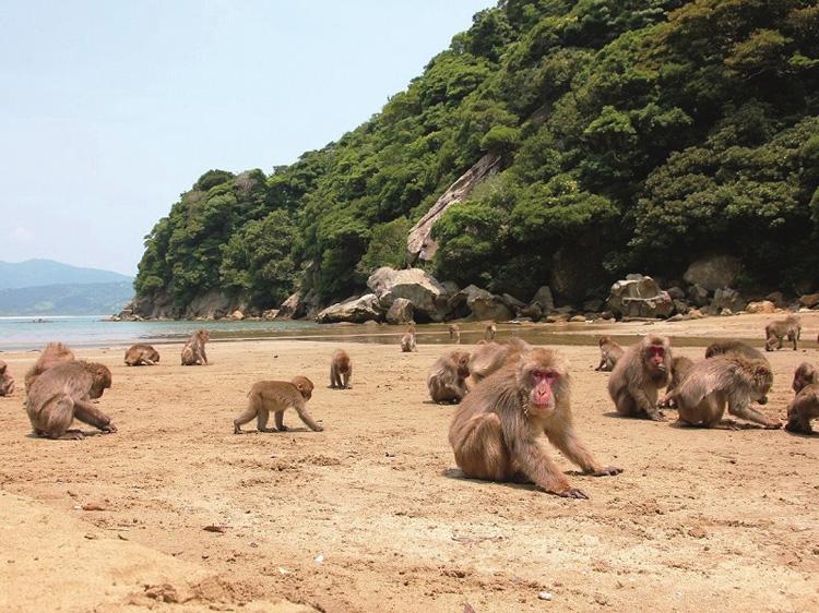 90頭の猿が出迎える野生の王国