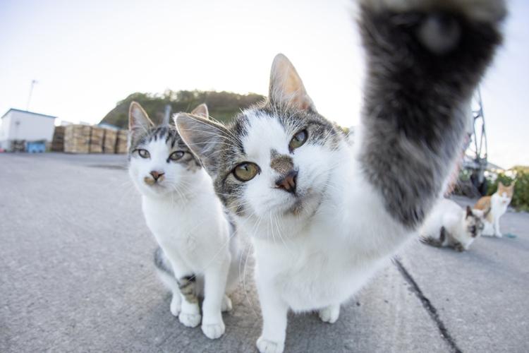 コロナ禍で猫ブームの第2波が(撮影/五十嵐健太)