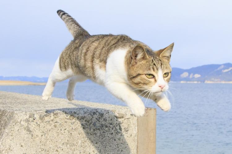 宙を飛ぶ猫の上手な撮り方は? (撮影/五十嵐健太)