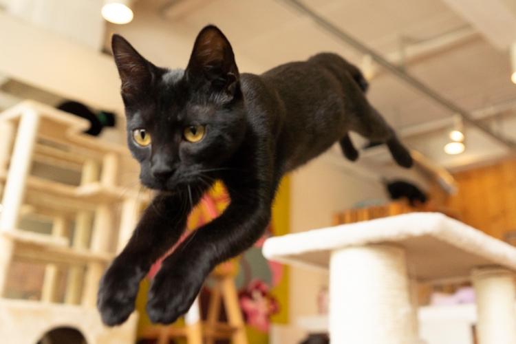 猫の能力、心理について動物学者が解説(撮影/五十嵐健太)