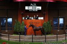 最高額をつけたシーヴの2019(写真:Japan Racing Horse Association)