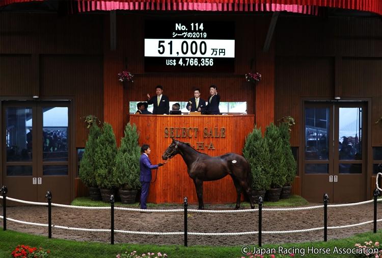 5.1億円の値がついた「シーヴの2019」(C)Japan Racing Horse Association
