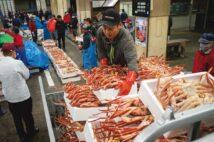 三国町では漁師も仲買人も料理人もプロフェッショナルな目利き揃い