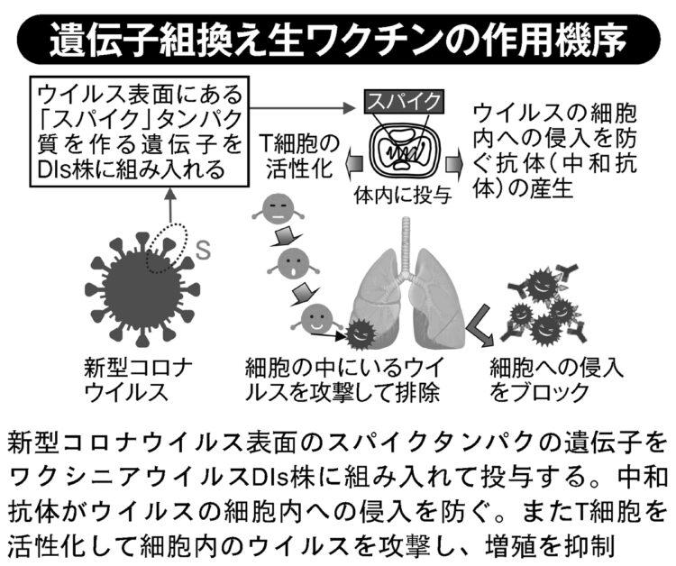 遺伝子組換え生ワクチンの作用機序