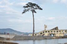 """東日本大震災から10年経ち、岩手の街並みはどう変わった?(写真は2011年の5月の""""奇跡の一本松"""")"""