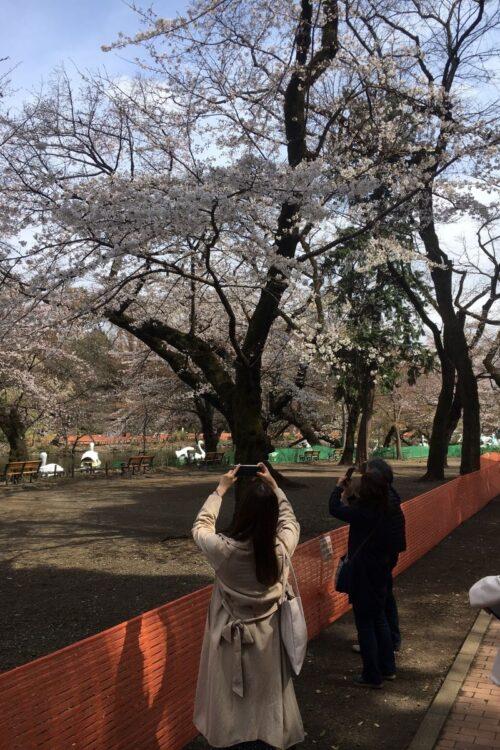 花見客の訪れるエリアの立ち入りを制限する井の頭公園(武蔵野市・三鷹市/筆者撮影)