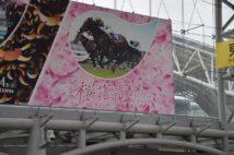舞台は阪神競馬場