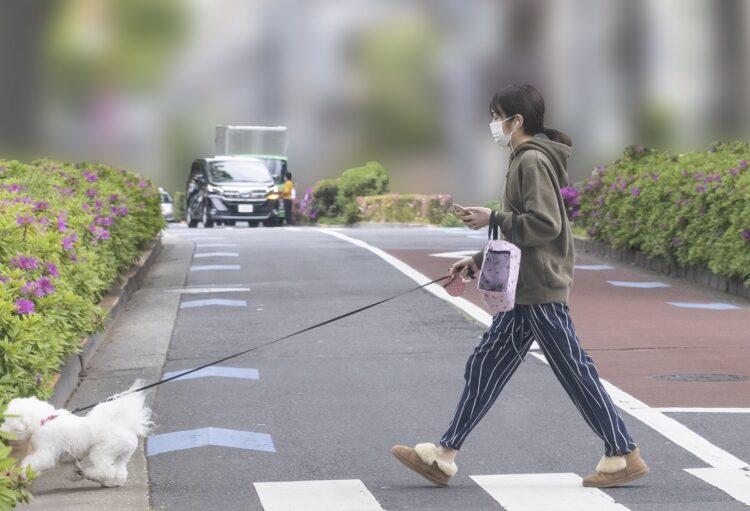 女優・高梨がもふもふ犬の散歩