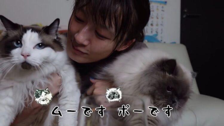 愛猫と一緒に配信中