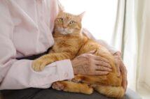 """ペットが長生きになったことで浮上する飼い主との""""老老介護""""問題"""