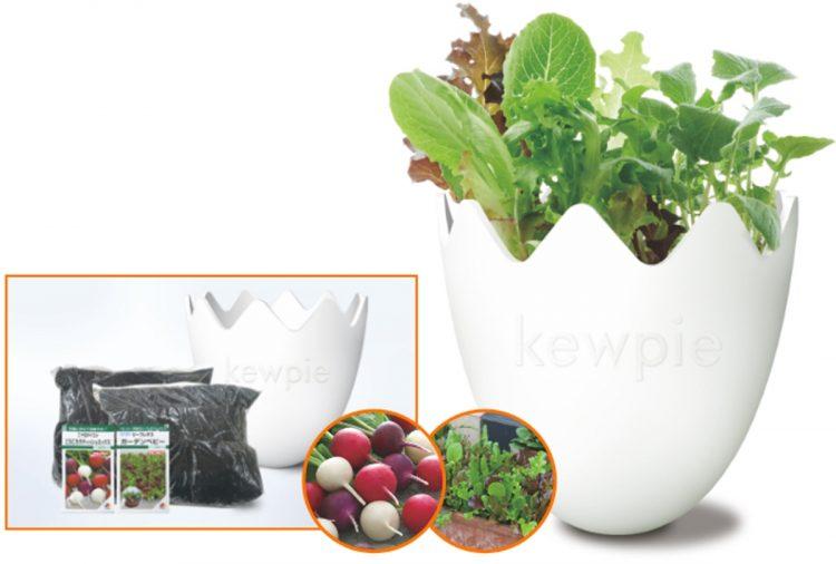 野菜2品種(ころころラディッシュミックス/リーフレタス・ガーデンベビー)の栽培を体験。オリジナルたまご形プランターもかわいい